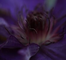 Purple Clematis by Sue Tyler