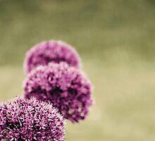 Garden View by Anne Staub