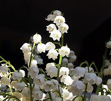 Lily of the Valley by OlaG