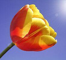 Tulip by MONIGABI