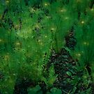 Fireflies in the Ferns by Chappy
