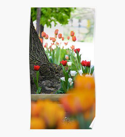 Albany in Springtime Poster