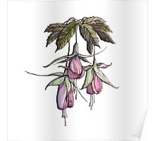 branches pink and purple fuchsia.Hand draw  ink and pen, Watercolor, on textured paper Poster