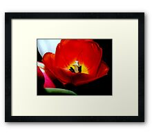 Nature's spring beauty © Framed Print