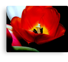 Nature's spring beauty © Canvas Print