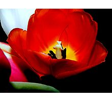 Nature's spring beauty © Photographic Print