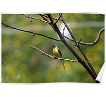 Yellow Wagtail Poster