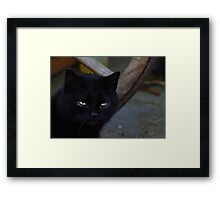 Cat in Black Framed Print