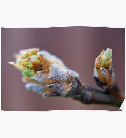 Pear Buds Poster