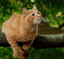 Cat out on a tree limb by Randall Nyhof