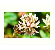 macro bee at work Art Print