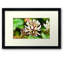 macro bee at work Framed Print
