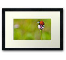 macro Lonely Ladybug Framed Print