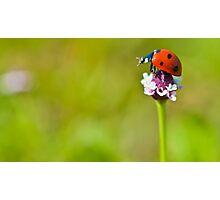 macro Lonely Ladybug Photographic Print