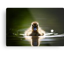 The Inquisitive Duckling Metal Print