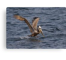 I Can Fly, I Can Fly ! Canvas Print