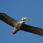 Brown Pelican In Flight by Michael  Moss