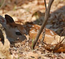 Fawn in the Ruff by BiggerPicture