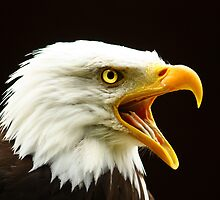 The Voice For Freedom by Trudi's Images