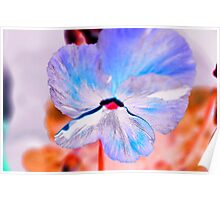 Inverted Pansy Poster