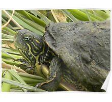 Turtle Mud Poster