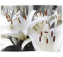 White lilies (Honoring all mothers) (Happy Mother's day May 8th) Poster