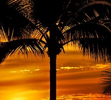 Mexican Sunset and Palm Tree by Rae Tucker