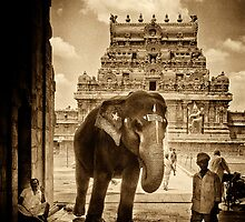 Sacred Elephant by lamiel