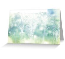 Dry field plants in a bright sun light with gossamer Greeting Card