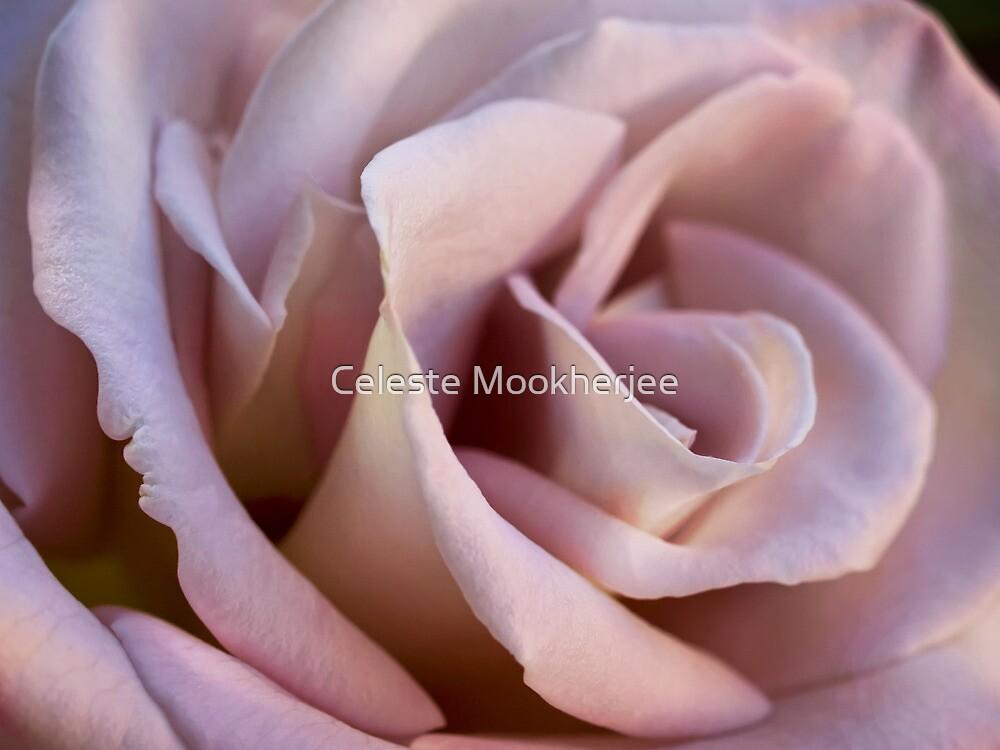 Porcelain petals by Celeste Mookherjee