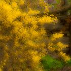 Sprawling Forsythia by sundawg7