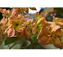 Orange bracts  Photographic Print