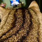 My Favourite Show Is On So Please Don't Disturb! by DEB CAMERON
