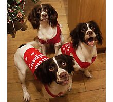 Santa's Little Helpers Photographic Print