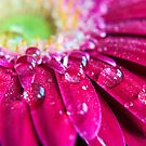 april showers.. by Michelle McMahon