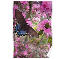 Butterly and Azaleas Poster