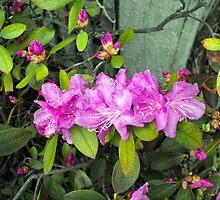 Spring Flowers 3 by katpix