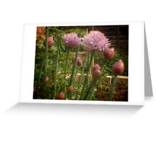 Chives - Through the Viewfinder Greeting Card
