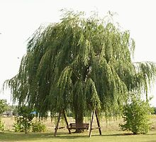 Weeping Willow Tree by Xpisto