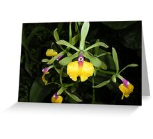 Yellow, pink and green orchids Greeting Card