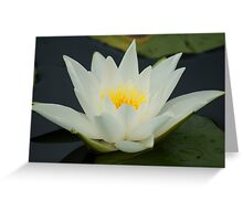 Lotus ~ Sign Of Peace And Enlightenment Greeting Card