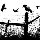 High Contrast Image of Crows at a fence corner by Randall Nyhof
