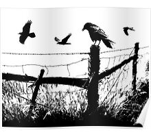 High Contrast Image of Crows at a fence corner Poster