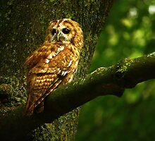 Eyes Of The Woodlands by Trudi's Images