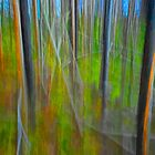 Impressionistic Vision of a Forest Scene No 213 by Randall Nyhof