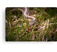 Serpent in the Grass Canvas Print