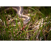 Serpent in the Grass Photographic Print