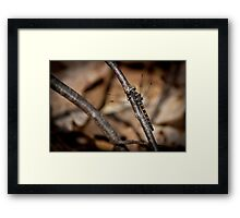 Ringed Boghaunter Dragonfly Framed Print