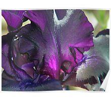 Iris - In Memory Poster