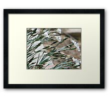 Delicate Diagonals for My Mom Framed Print